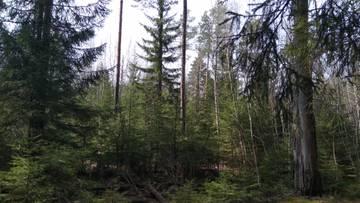http://s3.uploads.ru/t/thJNC.jpg