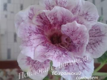 http://s3.uploads.ru/t/u2Uof.jpg