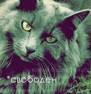 http://s3.uploads.ru/t/vPtA0.jpg