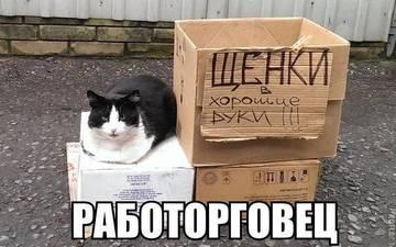 http://s3.uploads.ru/t/vT6d5.jpg