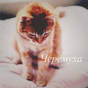 http://s3.uploads.ru/t/vUyR7.png