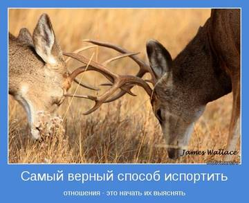 http://s3.uploads.ru/t/vnWt2.jpg