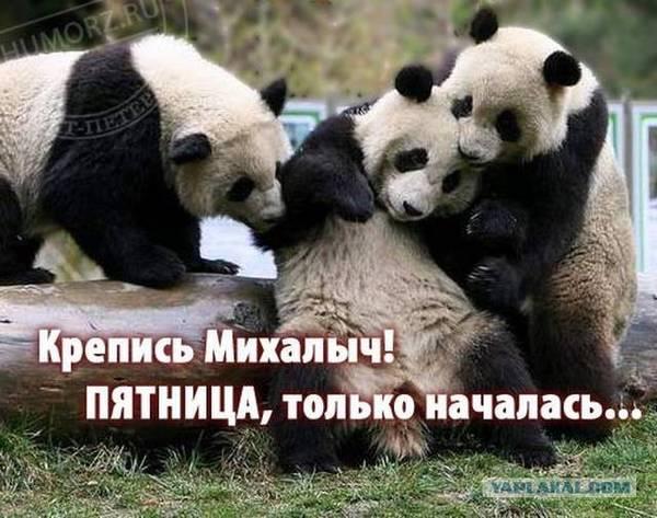 http://s3.uploads.ru/t/w9mhJ.jpg