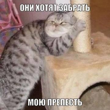 http://s3.uploads.ru/t/wPNhn.jpg