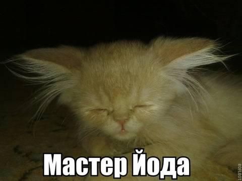 http://s3.uploads.ru/t/wlnrV.jpg