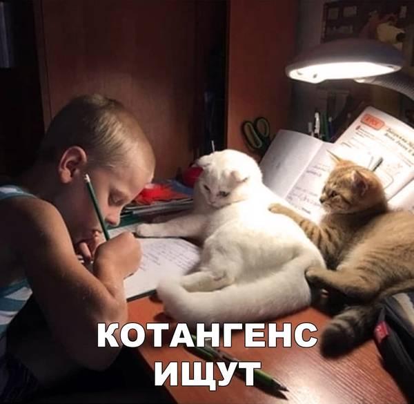 http://s3.uploads.ru/t/x9LkB.jpg