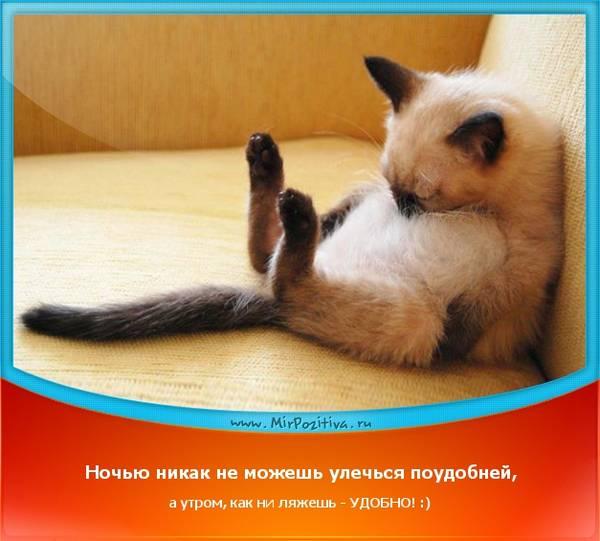 http://s3.uploads.ru/t/xbFoA.jpg