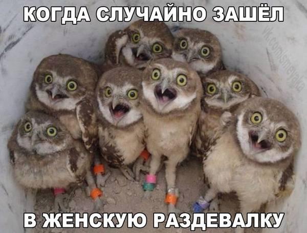 http://s3.uploads.ru/t/xfv0I.jpg
