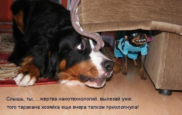 http://s3.uploads.ru/vsDfz.jpg