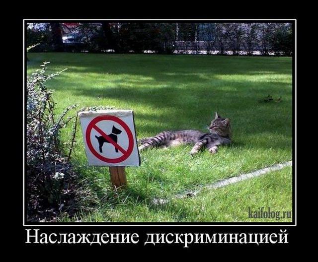 http://s3.uploads.ru/yLGwP.jpg