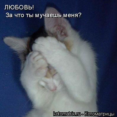 http://s3.uploads.ru/yQDeZ.jpg