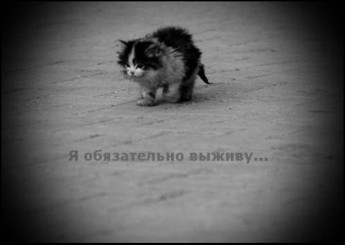 http://s3.uploads.ru/z9vXJ.jpg