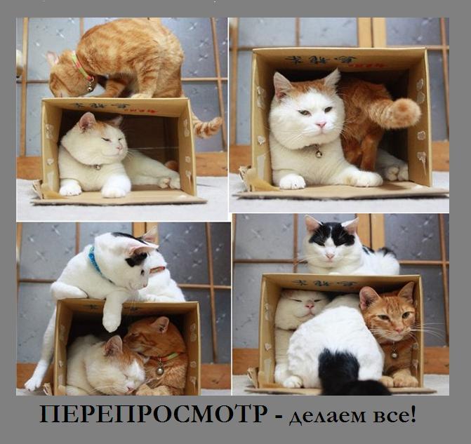 http://s3.uploads.ru/zKk1r.jpg