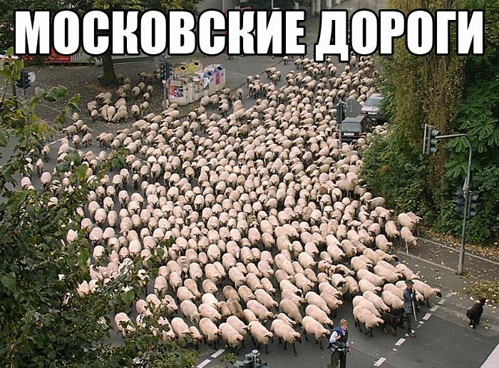 http://s3.uploads.ru/zLN46.jpg