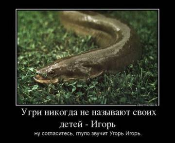 http://s3.uploads.ru/zMtON.jpg