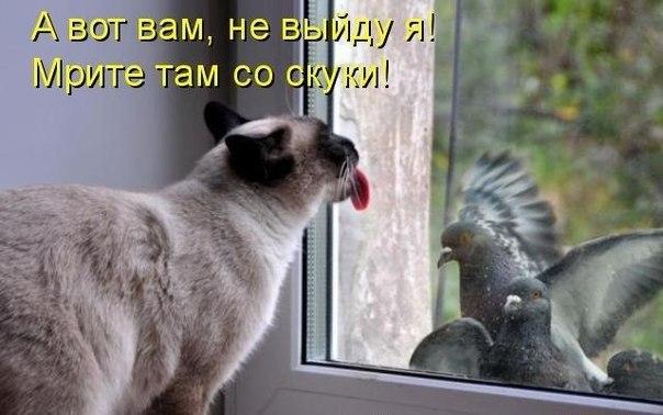 http://s3.uploads.ru/zjC3V.jpg