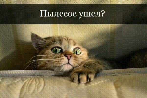 http://s3.uploads.ru/zuGIk.jpg