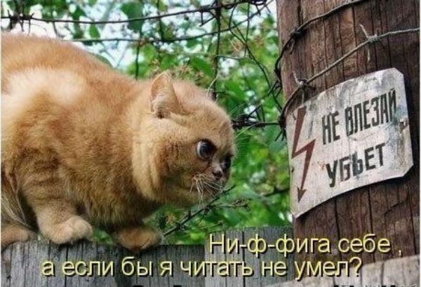 http://s3.uploads.ru/1yORC.jpg