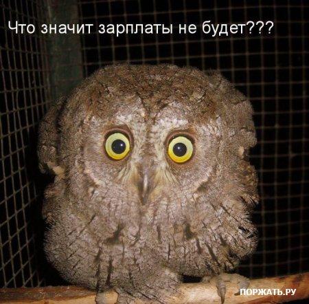 http://s3.uploads.ru/43p6Z.jpg
