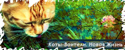 http://s3.uploads.ru/4j3NC.png