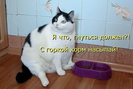 http://s3.uploads.ru/8E4Uv.jpg