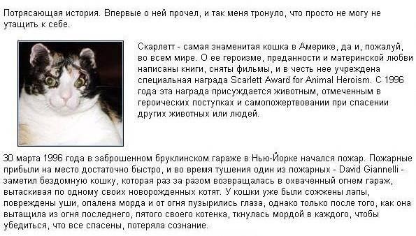 http://s3.uploads.ru/Aeuhb.jpg