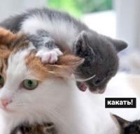 http://s3.uploads.ru/HxRdn.jpg