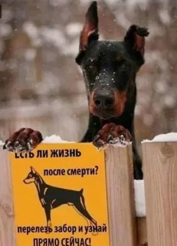 http://s3.uploads.ru/UpqaG.jpg