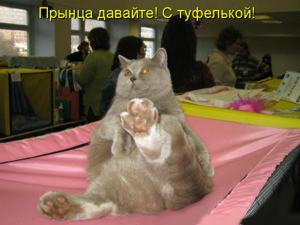 http://s3.uploads.ru/X3BxS.jpg