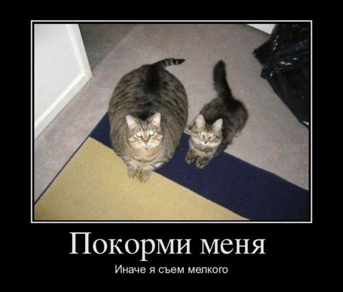 http://s3.uploads.ru/fwAgn.jpg