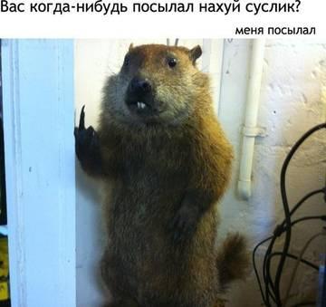 http://s3.uploads.ru/t/CPIJ8.jpg