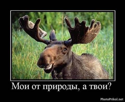 http://s3.uploads.ru/t/DLrBU.jpg