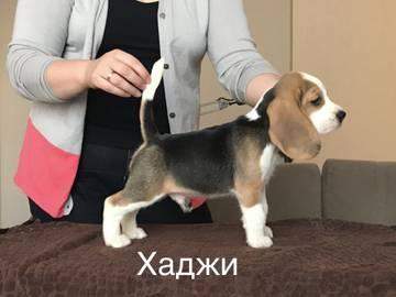 http://s3.uploads.ru/t/FQKsR.jpg