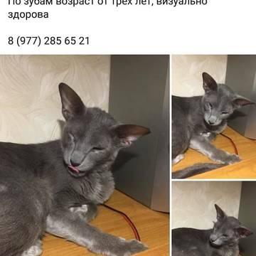 http://s3.uploads.ru/t/NhtOn.jpg