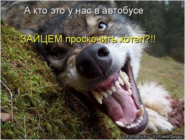 http://s3.uploads.ru/t/OvuKS.jpg