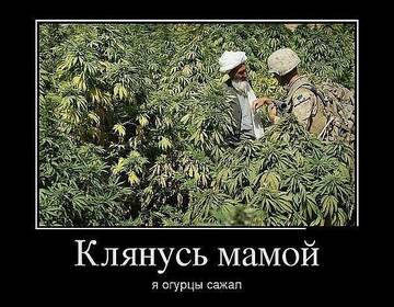 http://s3.uploads.ru/t/hmSfy.jpg