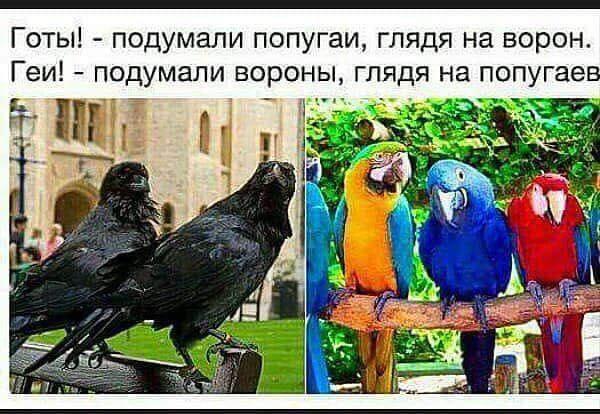 http://s3.uploads.ru/t/ipqOV.jpg