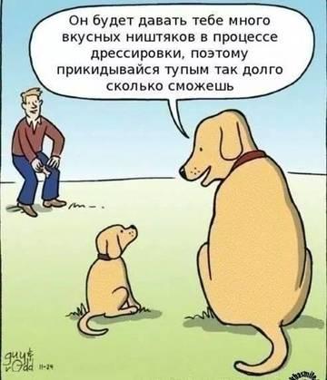 http://s3.uploads.ru/t/nI4wp.jpg