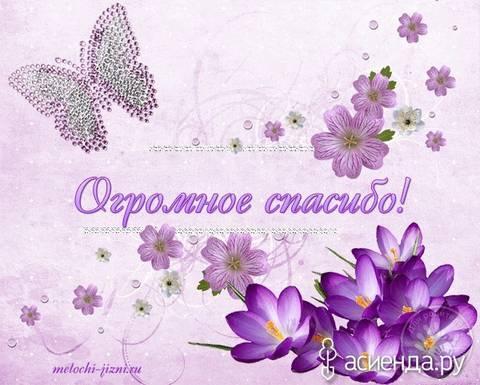 http://s3.uploads.ru/t/nQKYZ.jpg
